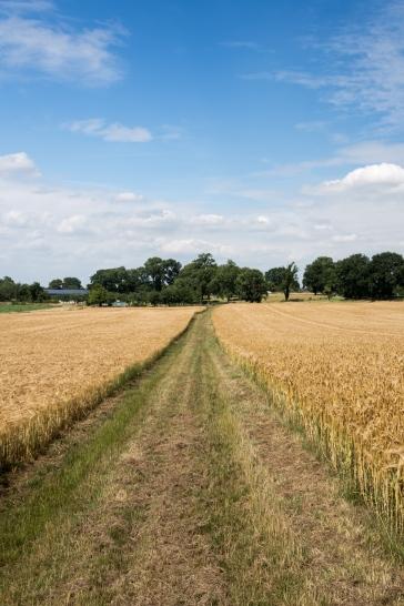 """""""Bike path"""" in Germany"""